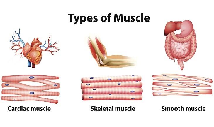 筋肉の重要度