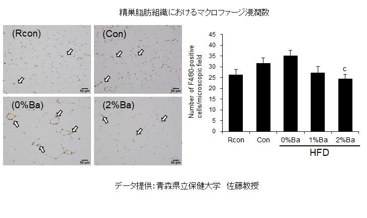 精巣脂肪組織グラフ ②ジャワしょうがのサルコペニア予防効果