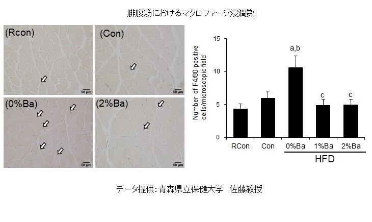 腓腹筋グラフ ②ジャワしょうがのサルコペニア予防効果